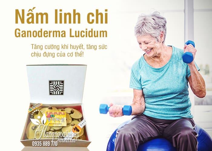 Nấm linh chi Ganoderma Lucidum chính hãng Hàn, loại 1 2