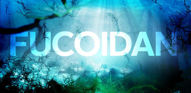 Fucoidan nào tốt nhất? Top 2 loại fucoidan mà bạn nên biết