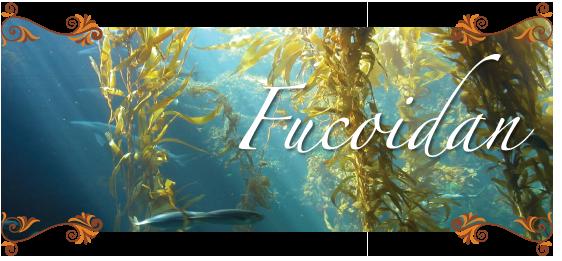 Fucoidan là gì? Nên dùng những loại fucoidan nào?