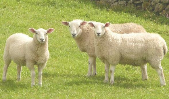 4 Lý do bạn nên chọn nhau thai cừu úc để làm đẹp
