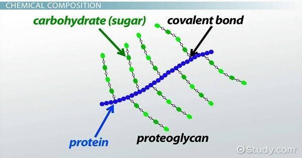 Proteoglycan là gì? Có tốt không? Tác dụng như thế nào?