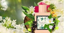 Nước hoa gucci bloom có thơm không và một số đánh giá từ CE