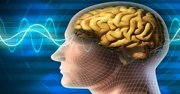 Thuốc bổ não ginkgo biloba có tốt không? Sự thật đằng sau