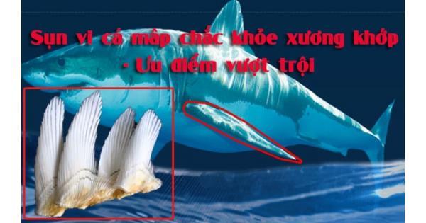 Top 3 Sụn vi cá mập loại tốt nhất hiện nay, Nhất định phải biết