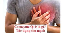 Coenzyme Q10 là gì? Coq10 có tác dụng gì với tim mạch