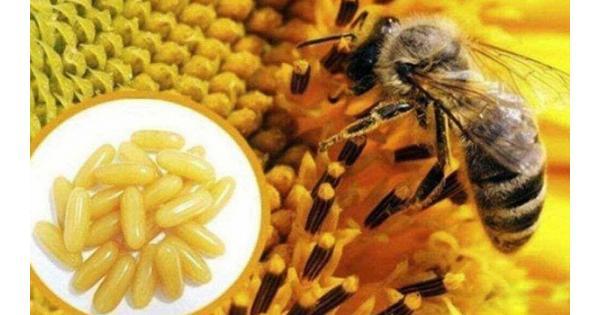 Đánh giá Top 5 viên uống sữa ong chúa tốt nhất hiện nay