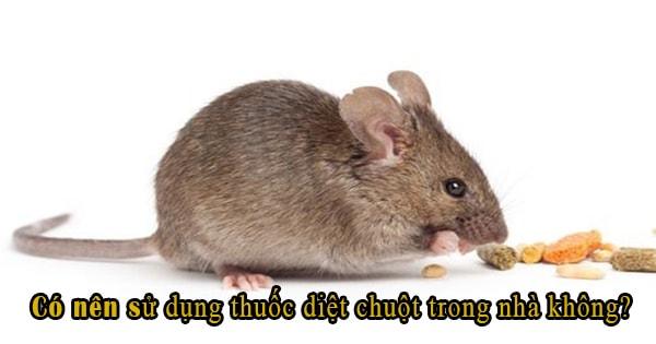 có nên sử dụng thuốc diệt chuột trong nhà không