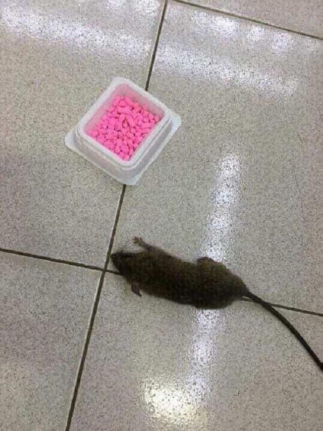 thuốc diệt chuột nhật dethmor